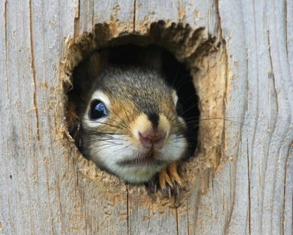 Beautiful Pictures of Squirrel (41)