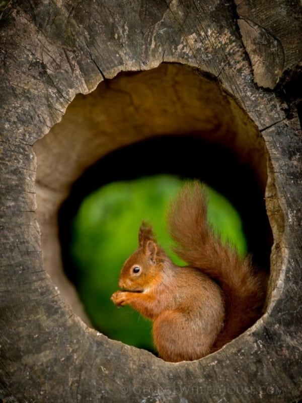 Beautiful Pictures of Squirrel (43)