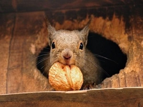 Beautiful Pictures of Squirrel (49)