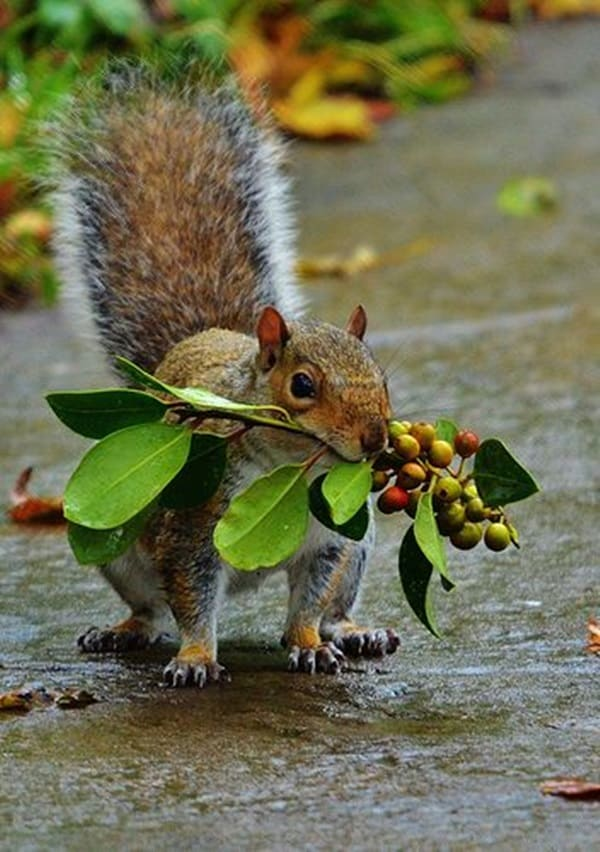Beautiful Pictures of Squirrel (5)