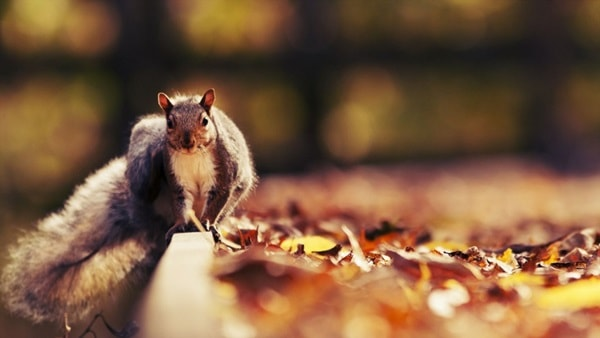 Beautiful Pictures of Squirrel (56)