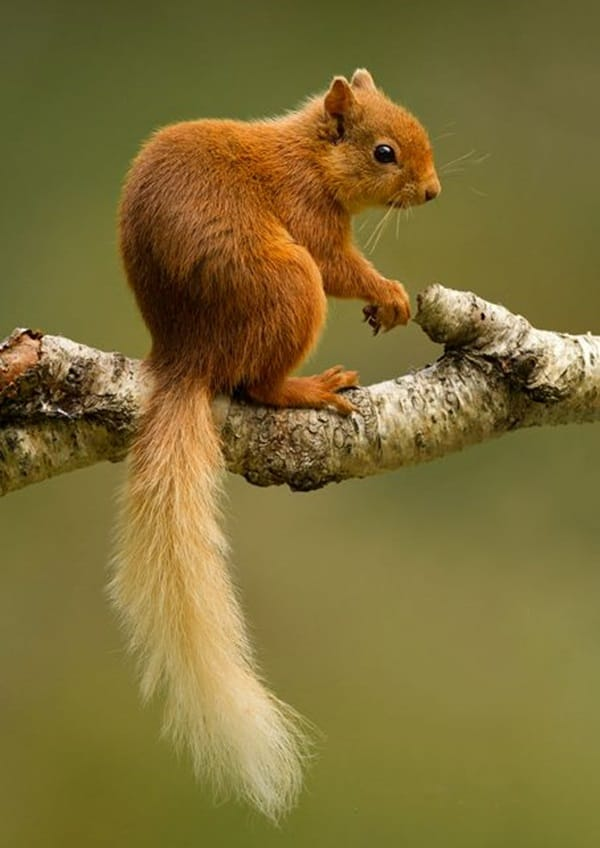 Beautiful Pictures of Squirrel (6)