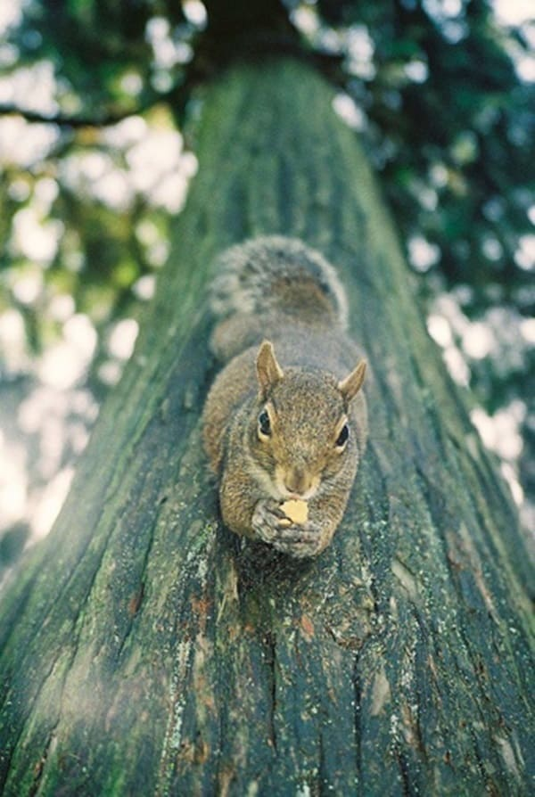 Beautiful Pictures of Squirrel (8)