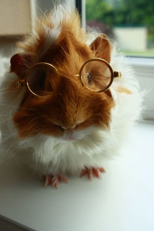 Cute Pictures of Animals Wearing Glasses  (10)
