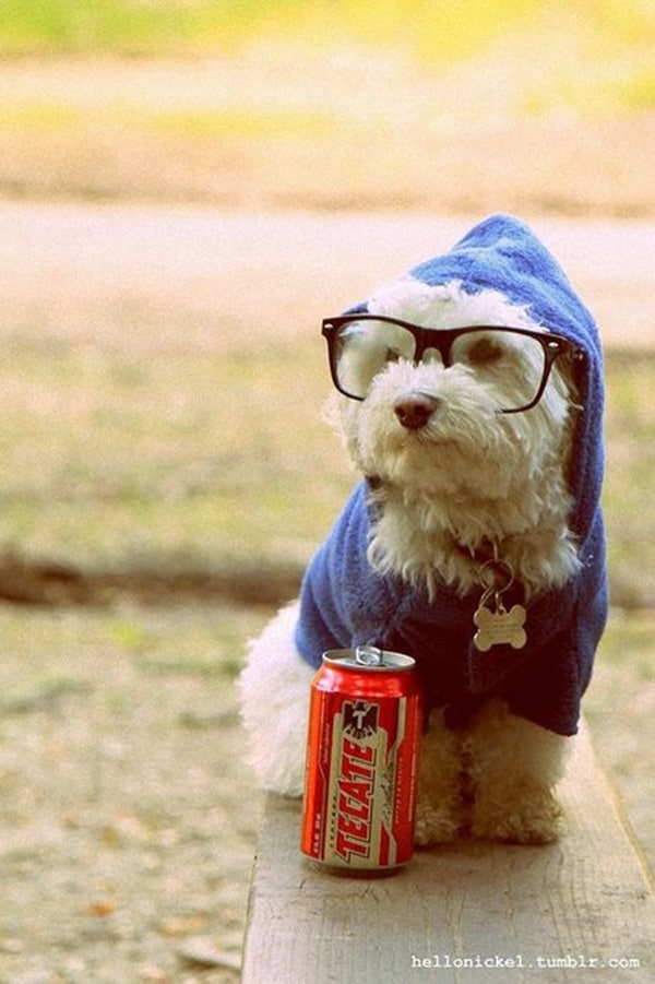 Cute Pictures of Animals Wearing Glasses  (12)