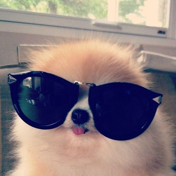 Cute Pictures of Animals Wearing Glasses  (13)