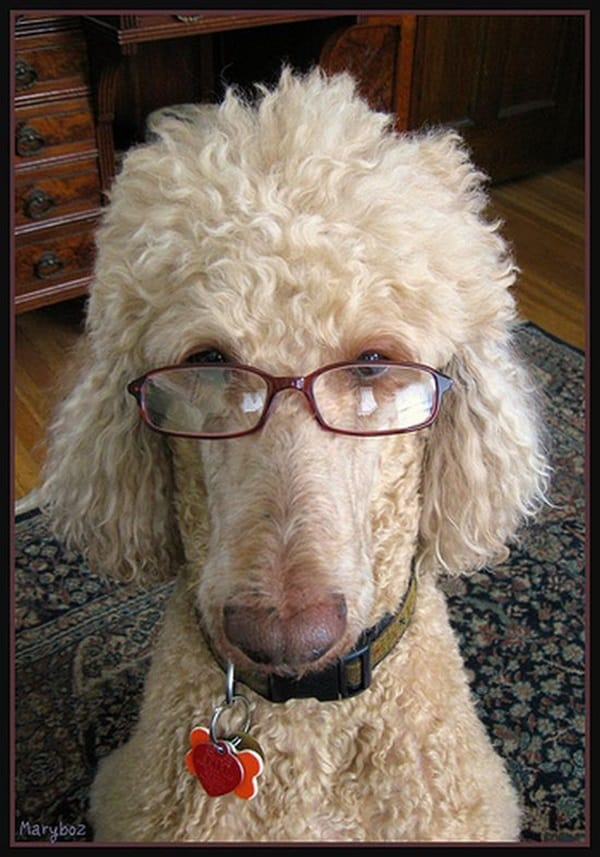 Cute Pictures of Animals Wearing Glasses  (14)