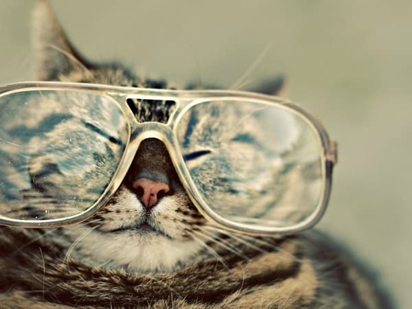 Cute Pictures of Animals Wearing Glasses  (16)