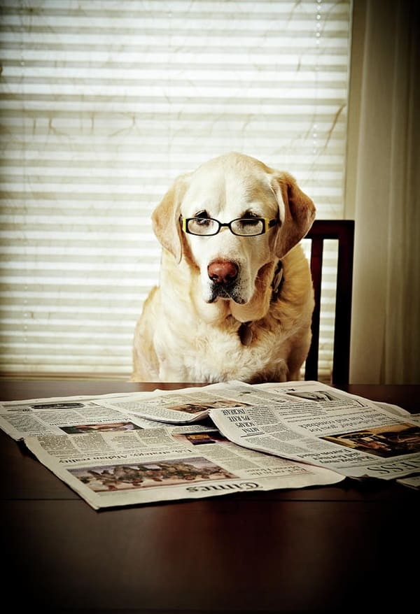 Cute Pictures of Animals Wearing Glasses  (17)