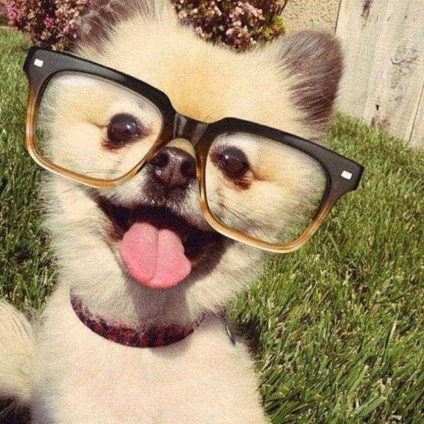 Cute Pictures of Animals Wearing Glasses  (18)