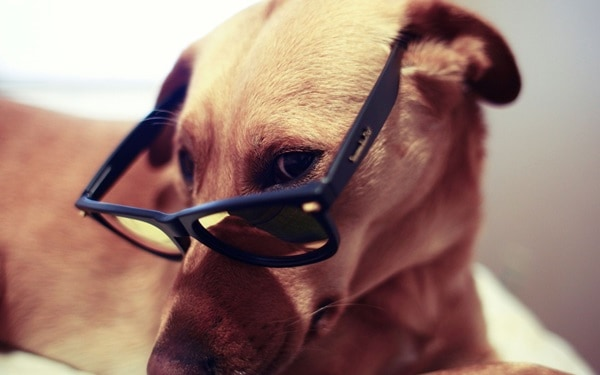 Cute Pictures of Animals Wearing Glasses  (19)