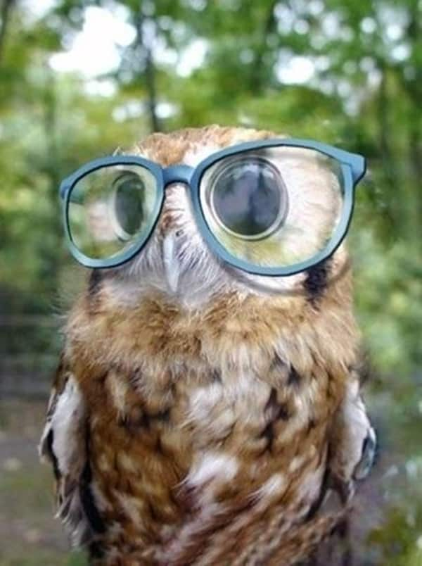 Cute Pictures of Animals Wearing Glasses  (2)