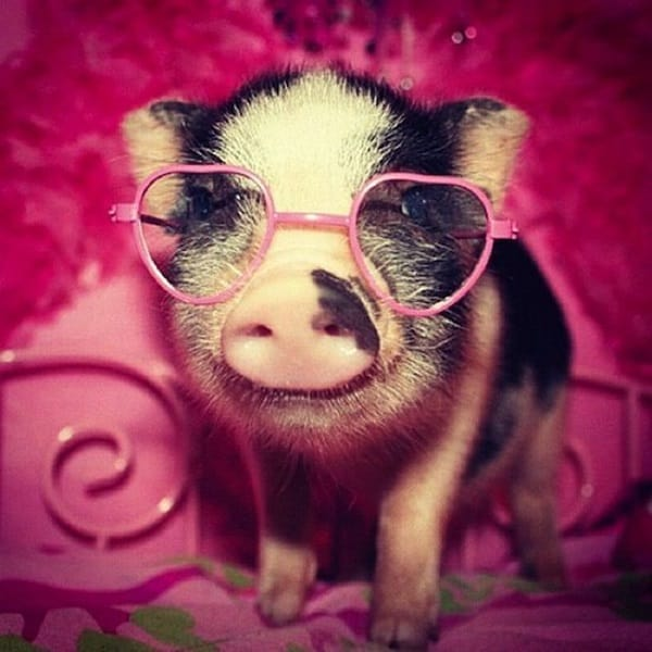 Cute Pictures of Animals Wearing Glasses  (20)
