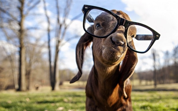 Cute Pictures of Animals Wearing Glasses  (21)