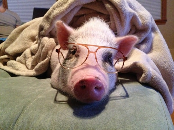 Cute Pictures of Animals Wearing Glasses  (23)