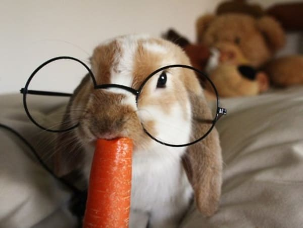 Cute Pictures of Animals Wearing Glasses  (27)