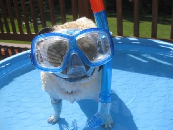 Cute Pictures of Animals Wearing Glasses  (28)