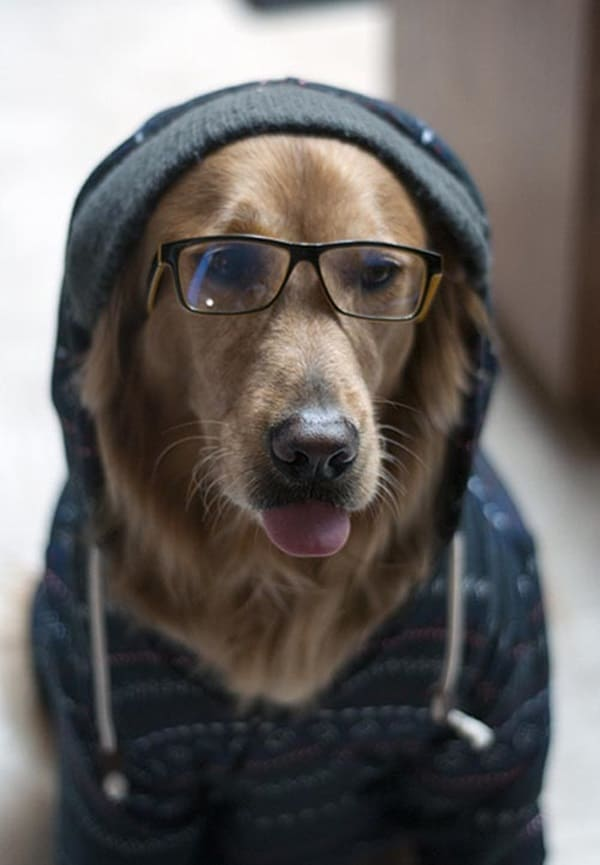 Cute Pictures of Animals Wearing Glasses  (31)