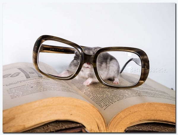 Cute Pictures of Animals Wearing Glasses  (34)
