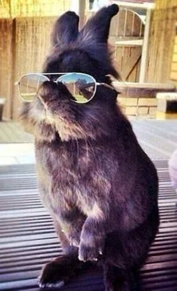 Cute Pictures of Animals Wearing Glasses  (5)