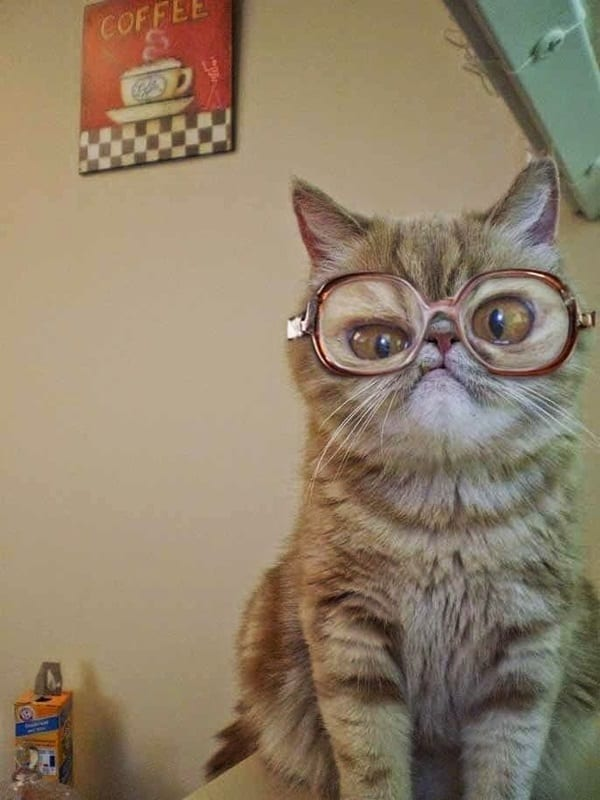 Cute Pictures of Animals Wearing Glasses  (6)