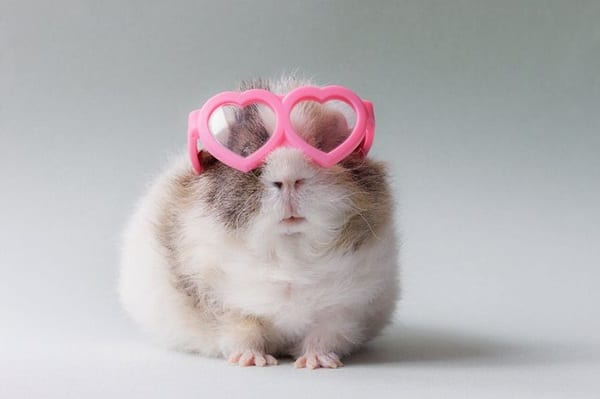 Cute Pictures of Animals Wearing Glasses  (8)