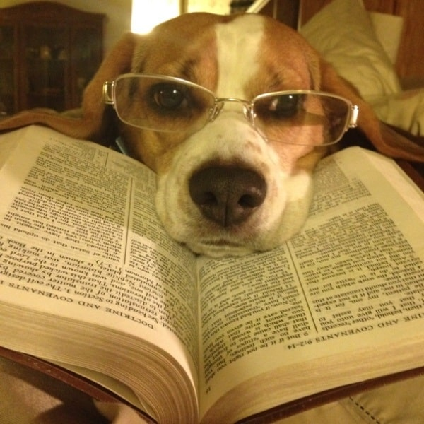 Cute Pictures of Animals Wearing Glasses  (9)