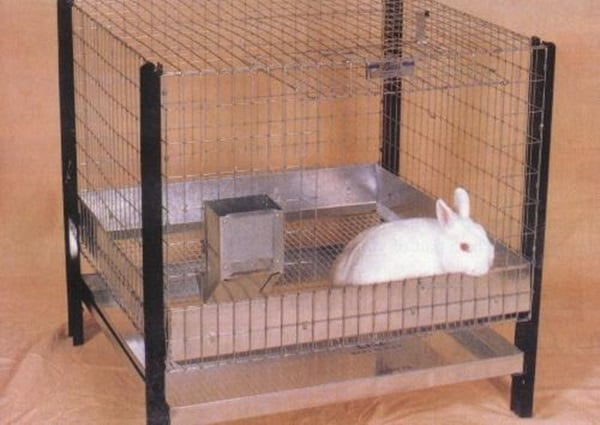 How to Care for a Pet Rabbit1