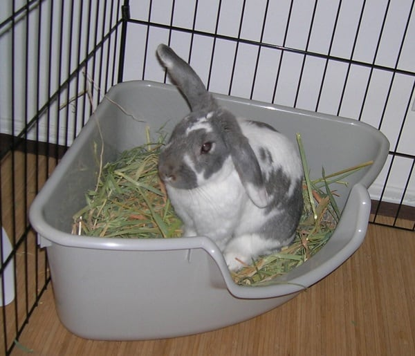 How to Care for a Pet Rabbit5