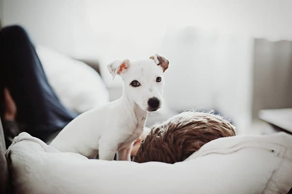 Surviving the First Night with your puppy3