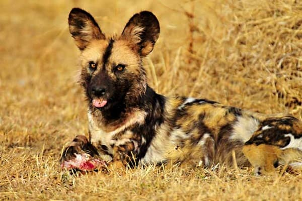 Most Popular Small Dogs In South Africa
