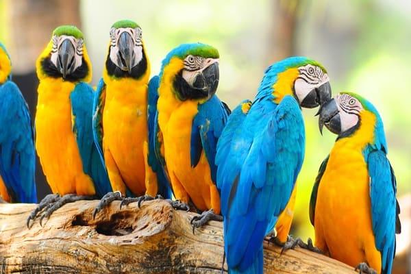 Parrot Sounds Like Dog