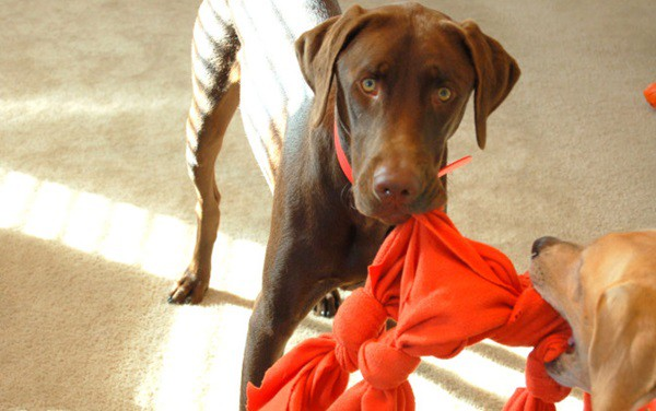 20 DIY Dog Toys you Can Make at Home 15