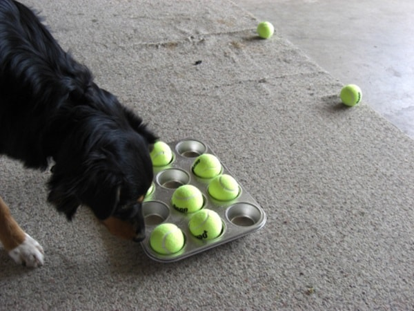 20 DIY Dog Toys you Can Make at Home 18