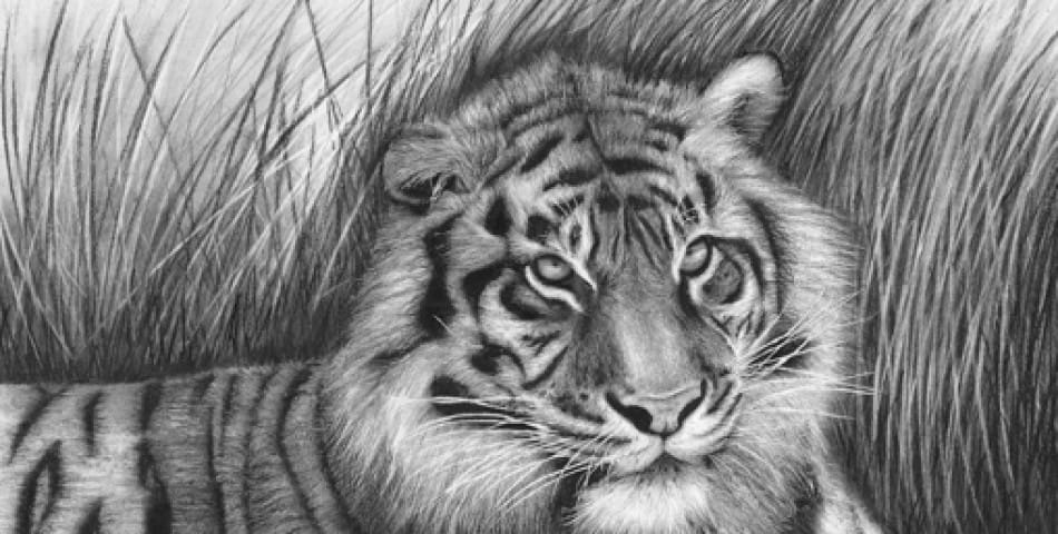 40 Beautiful Animal Sketches  (1)