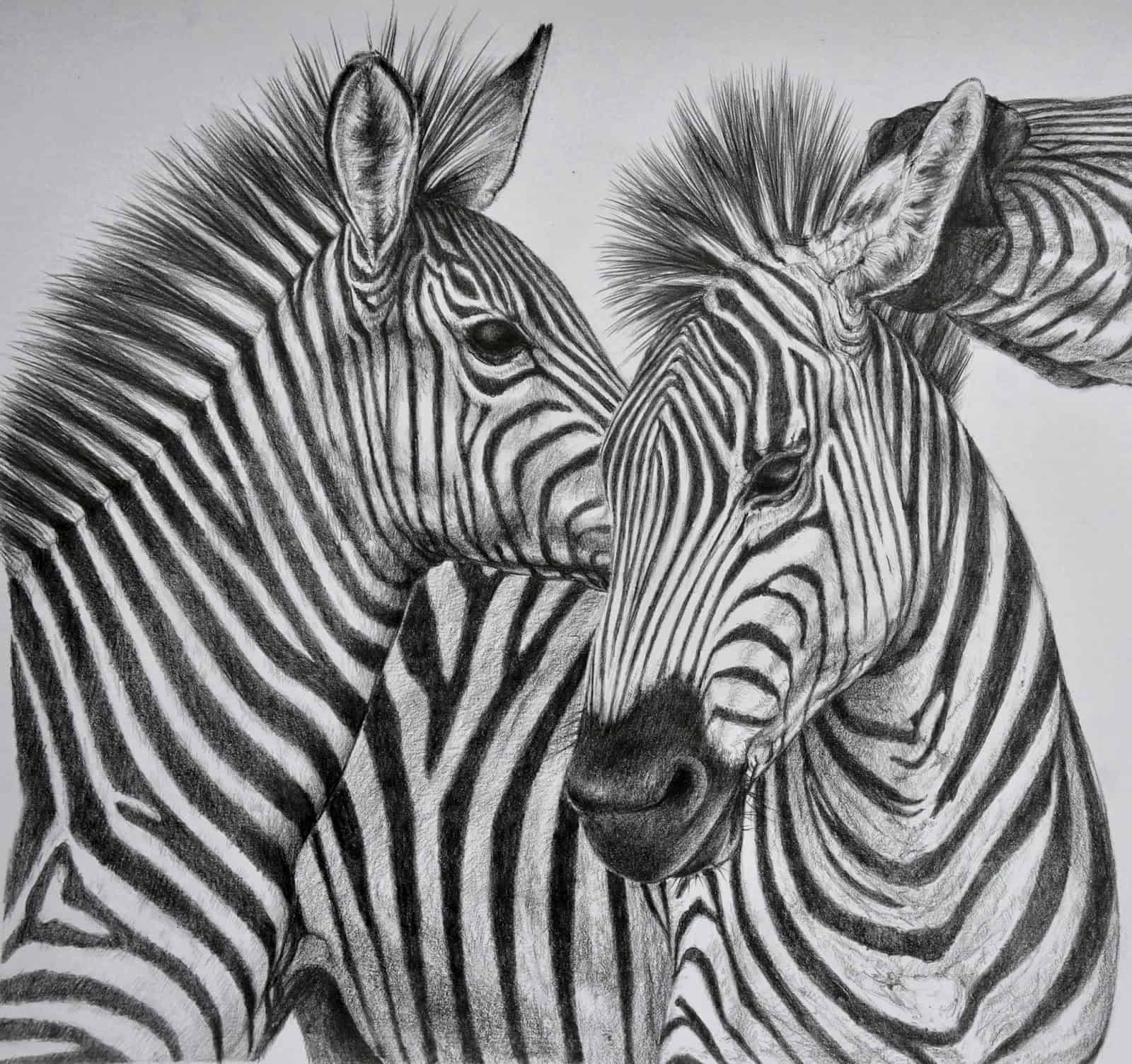 animal sketches realistic zebra animals wild inspiration drawings drawing sketch pencil tailandfur progress easy hipster