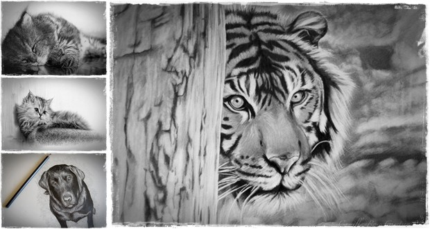 animals pencil animal sketches drawing draw realistic step inspiration