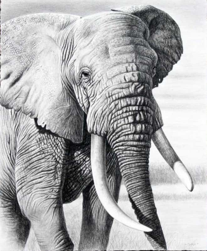 40 Beautiful Animal Sketches  (12)