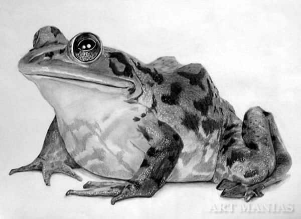 40 Beautiful Animal Sketches  (14)