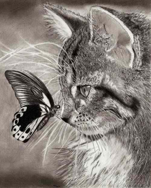animal sketches realistic inspiration