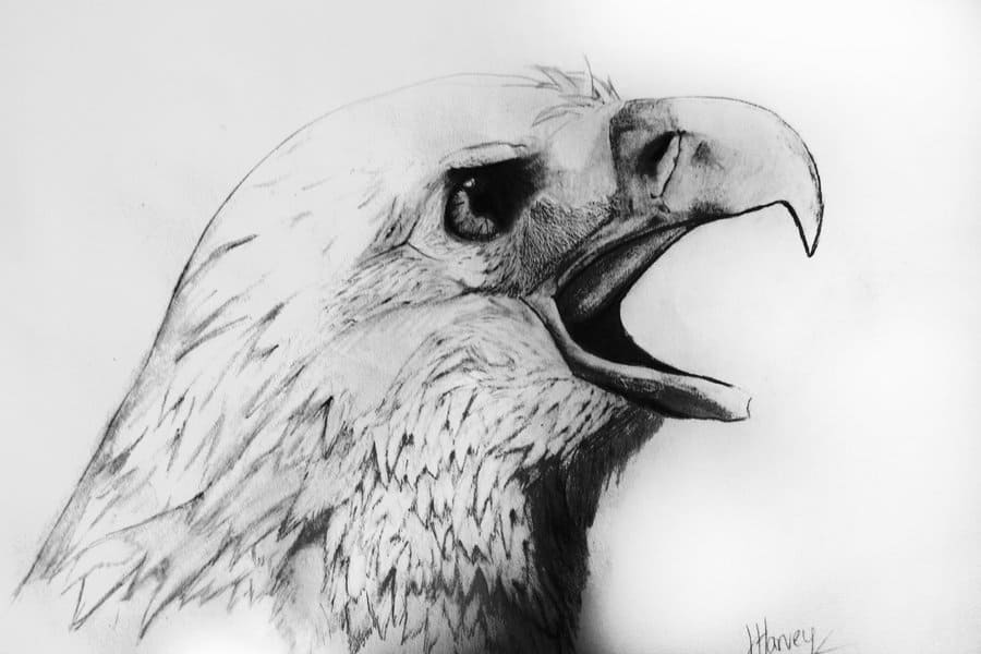 Pencil Sketches Of Animals And Birds