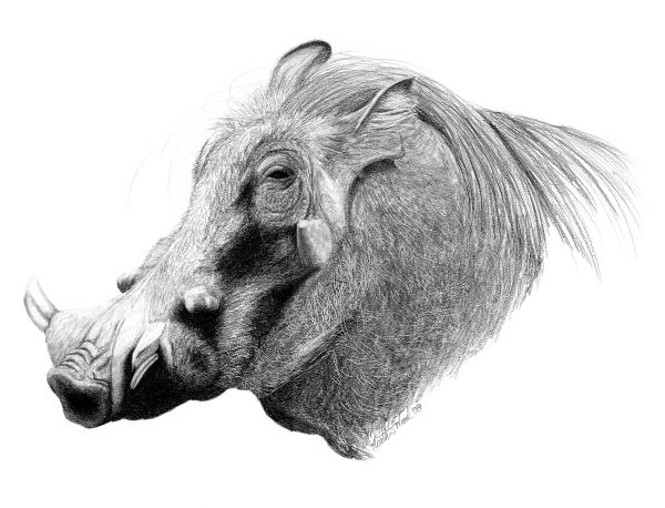 40 Beautiful Animal Sketches  (17)