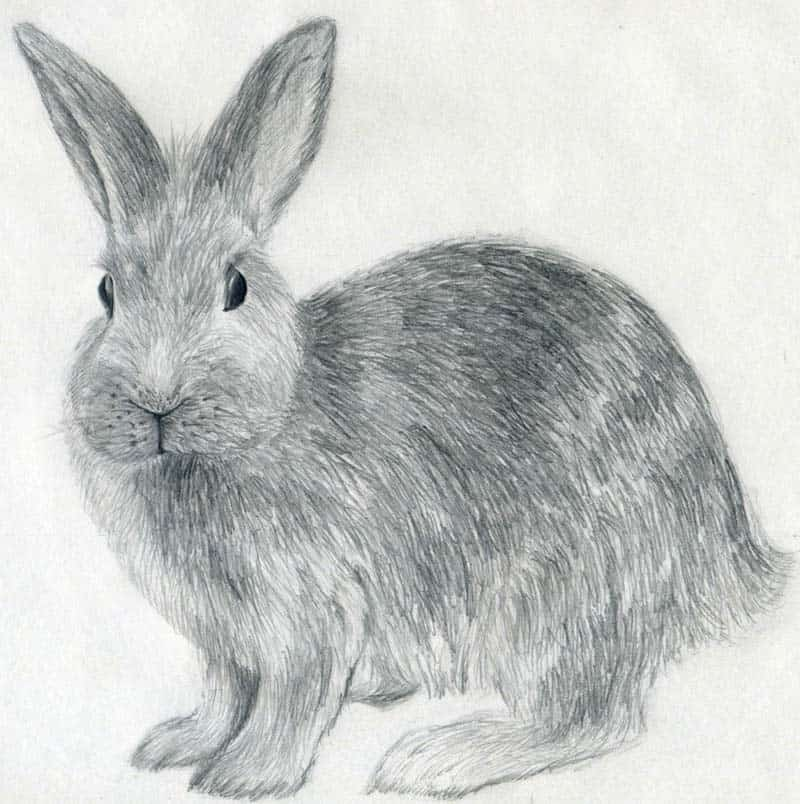 40 Beautiful Animal Sketches  (18)
