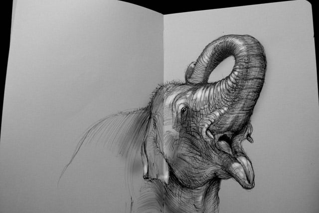 40 Beautiful Animal Sketches  (19)
