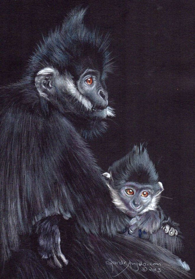 animal animals drawing drawings monkey realistic sketches pencil dog monkeys looking inspiration stunning paper