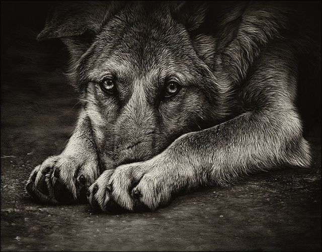 40 Beautiful Animal Sketches  (23)