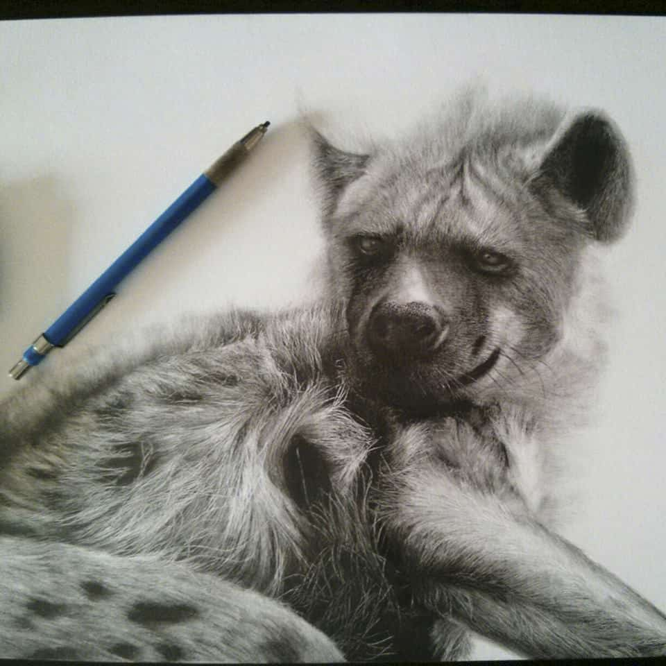 hyena animal sketches drawings realistic drawing pencil resting inspiration animals lisandro wild wildlife african dog onlypencil pena