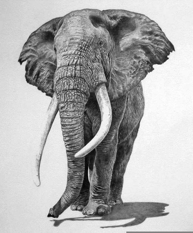 40 Beautiful Animal Sketches  (26)