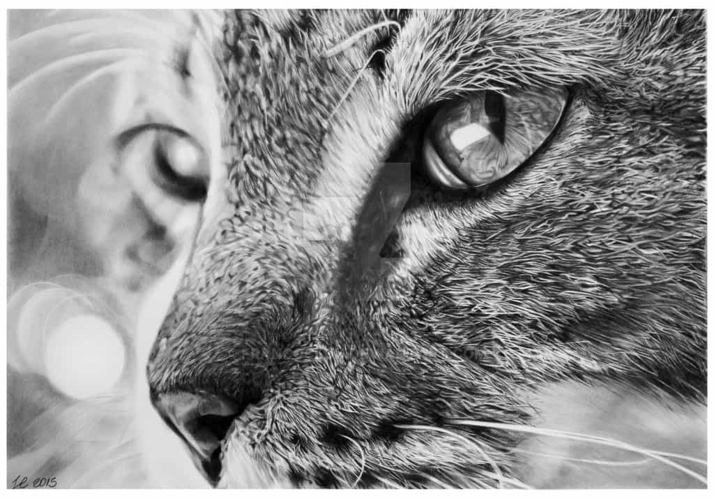 animal sketches realistic franco pencil clun drawings deviantart animals drawing artist inspiration realism cat pets illustration pages via