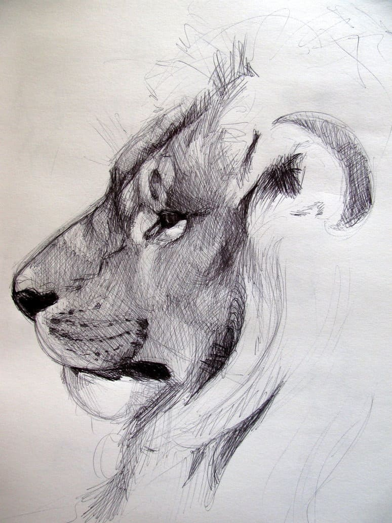40 beautiful animal sketches 3